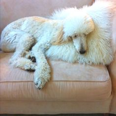 Waiting for 'Someone' to come home. I might as well take a snooze on this pillow. It's kinda fuzzy like me..............