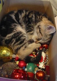napping in the ornaments box