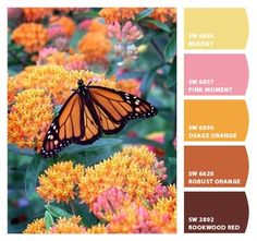 monarch butterfly hues / Paint colors from Chip It! by Sherwin-Williams