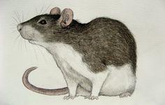 Victorian Pet Rat painting | pet rat by moussee