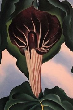 Jack-in-the-Pulpit III, by Georgia O'Keeffe, 1930