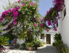 Mediterranean #flowers cascade over a white house in the #beautiful town of Salobrena. Photo © Sophie Carefull