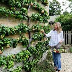 @amandacbrooks #fruittree #espalier #englishhome #landscape #garden via Joe Ruggerio Collection