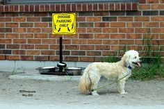 https://flic.kr/p/soTQ5P   Doggie Parking Only   Dog and sign seen at Hutches On The Beach, Hamilton, Ontario.