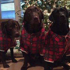 They. They have matching pj's! My heart!