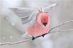 Top 5 Most Beautiful Rose Pink Colored Birds In The World