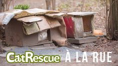 Support the installation of the CatRescue ASBL at rue Solleveld