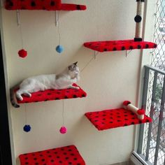 animals and pets Feral Cat Shelter, Feral Cats, Cat Play Rooms, Diy Cat Enclosure, Cat Towers, Cat Shelves, Cat Room, Cat Decor, Cat Accessories