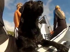 That's an unusual and cool encounter between wild dolphins and the dog. #Animals