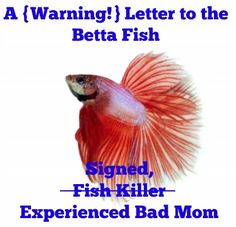 A Letter to My Son's Betta Fish: please don't die. Signed, the Fish Killer #humor