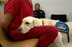 Jeeter, the courthouse dog, helping a prisoner feel better.