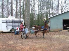 Dreams Farm Llamas Llamas, Raising, Horses, Dreams, Activities, Animals, Animaux, Horse, Animal