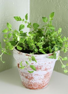 Growing herbs! Everything you need to know :)