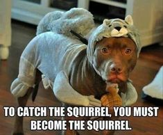 Funny pitbull in a squirrel costume. Become the squirrel Funny Shit, Funny Dog Memes, Funny Animal Memes, Funny Animal Pictures, Funny Cute, Funny Dogs, Funny Animals, Cute Animals, Adorable Pictures