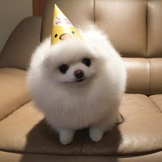 1882 Best Pomeranian Babies Images In 2019 Pomeranian Puppy