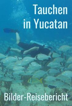 Tauchen in Yucatan ist ein beeindruckendes Abenteuer. Mit Fischschwärmen tauchst Du vor der Küste. Höhlentauchen und Kavernentauchen ist in den Cenoten bei Tulum angesagt. Inspirationen und Reisetipps im Bilder-Reisebericht. #abenteuer #tauchen Cozumel, Riviera Maya, Tulum, Diving, Movies, Movie Posters, Destinations, Snorkeling, Mexico