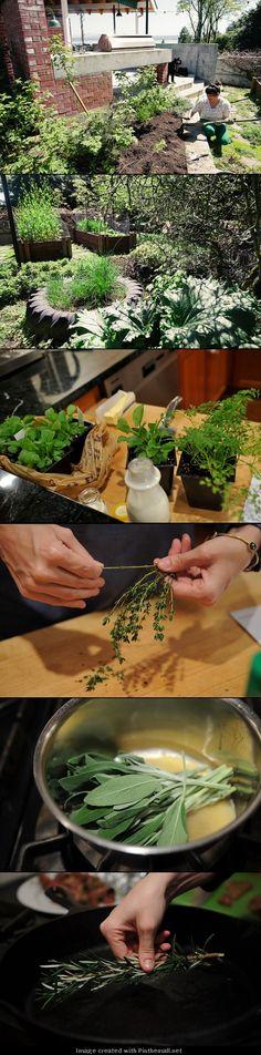 Kitchen Garden| Serafini Amelia| Learning to love your herb garden