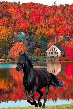 Black Knight Horse Friesenpferde u. Beautiful Horse Pictures, Most Beautiful Horses, Cute Horses, Pretty Horses, Black Horses, Wild Horses, Beautiful Creatures, Animals Beautiful, Cavalo Wallpaper