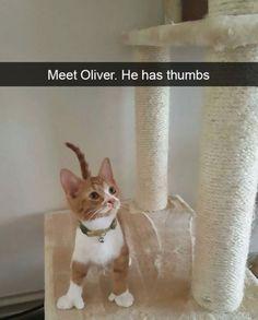 New meme compilation (cat memes,dog memes,pets memes,animal memes) Funny Animal Memes, Cute Funny Animals, Funny Animal Pictures, Cute Baby Animals, Funny Cats, Funny Memes, Humorous Cats, Cute Animal Quotes, Funny Cat Photos