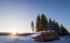Dans les bois d'Haybes © Thierry MICHEL #Ardennes #France