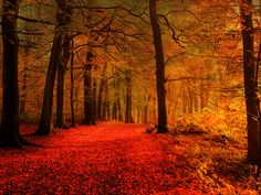 15 Stunningly Surreal Autumn Paths - Beautiful Fall Photos - Country Living