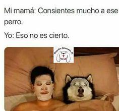 Síguenos en Facebook e Instagram como @PasiónCanina21 Mexican Funny Memes, Mexican Humor, Funny Spanish Memes, Really Funny Memes, Wtf Funny, Funny Jokes, Hilarious, Funny Images, Funny Pictures