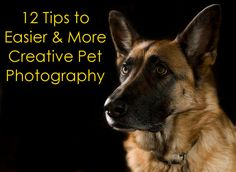 12 Tips to Easier and More Creative Pet Photography | Backdrop Express Photography Blog