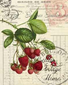Vintage Illustrations Botanical Red Raspberry Print, Pillow, Note Cards, Tea Towel - Original artwork created from vintage bookplates, etchings Éphémères Vintage, Vintage Labels, Vintage Ephemera, Vintage Cards, Vintage Paper, Vintage Postcards, Vintage Prints, Vintage Images, Vogue Vintage