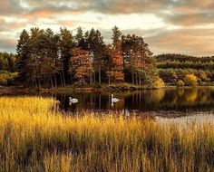 Knapps Loch, Scotland 📸 @_smalltowhero_  Tag us to be featured 🇬🇧 ____________________________________________ #visitbritain #lovegreatbritain #britains_talent #greatbritain #scottishhighlands #ig_uk #icu_britain #scotland #visitscotland #scotlandsbeauty #scotlandlover #scotland_greatshots #lovescotland #igscotland #igersscotland #instascotland #ig_scotland #capturingbritain #explore_britain #ukpotd #instabritain #knappsloch #landscape_captures #ig_countryside #thelensbible #scotspirit…