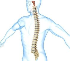 Study: Infusion of Cannabinoids in Spinal Canal Effective at Blocking #Pain - #MMJ - Medical Marijuana News http://www.medical-marijuana.news?p=2476&preview=true