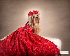 Red Hair Bow, Rose Gown, French Clip, Gown Photos, Girls World, Dog Bows, Red Satin, Well Dressed, Hair Clips