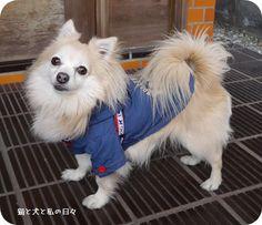 里親さんブログ笑われちゃったでちゅyo - http://iyaiya.jp/cat/archives/72670