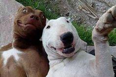 Chó mà cũng biết tự sướng  Bếp hồng ngoại: http://noithatbepmoi.com/bep-hong-ngoai-bep-dien.html, máy hút mùi: http://noithatbepmoi.com/may-hut-mui.html, bếp từ brandt: http://noithatbepmoi.com/bep-tu-brandt.html