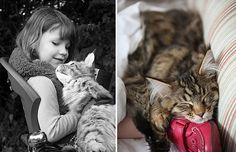A heartwarming story of Iris Grace, a young girl with autism, and her therapy cat Thula. So many beautiful photos too! Such a lovely friendship Super Furry Animals, Autistic Artist, Cat Work, Son Chat, Dog Health Care, Maine Coon Cats, Cat Facts, Halloween Cat, Cats And Kittens