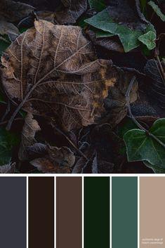 Autumn Leaves   Color Palette Inspiration   Dark Neutral Color Palette   For the Home   Wedding Colors   Paint Colors   Scrapbooking Ideas   DIY Crafts Color Schemes Colour Palettes, Colour Pallette, Color Palate, Neutral Colour Palette, Color Combinations, Popular Color Schemes, Autumn Leaf Color, Autumn Leaves, Design Seeds