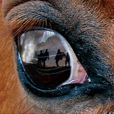 This is an image from the film War Horse. The close up of the eye shows the emotion of the horse and allows the viewer to connect with the film