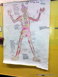 Great Human Body Systems activity!