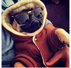 Not a single f*ck will be given by this pug today.