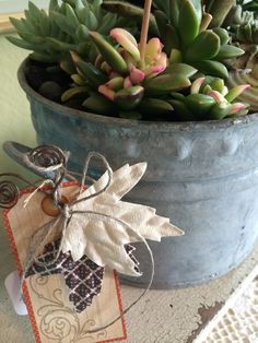Succulents for Fall.