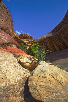 Lavender Canyon in Canyonlands National Park, UT