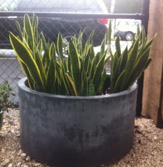 Veggie garden planter?