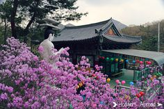 A list of all the flowers that bloom in Spring in Seoul! Click here to see them all!