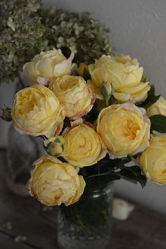 秋の'パトラッシュ'(Patrache)  オランダ・ヤンスペックのバラ  #ヤンスペック
