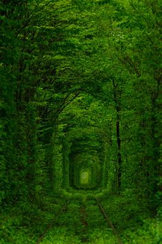 Tunnel of love, Ukraina Places Around The World, Oh The Places You'll Go, Places To Travel, Places To Visit, Around The Worlds, Tunnel Of Love Ukraine, Wonderful Places, Beautiful Places, Beautiful World