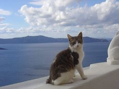The Aegean cat is a naturally occurring landrace of domestic cat originating from the Cycladic Islands of Greece. Development as a formal breed began in the early 1990s by breeders in the fledgling Greek cat fancy, but the variety has yet to be recognized by any major fancier and breeder organization. It is considered to be the only native Greek variety of cat.