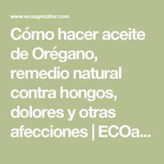 Cómo hacer aceite de Orégano, remedio natural contra hongos, dolores y otras afecciones | ECOagricultor