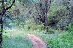 Take a walk on the WILD side. Sariska #NationalPark Alwar!  #wild #beauty #path #pathfinder #adventure #walk #ttot