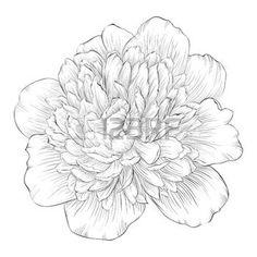 gravure fleur: beau noir et blanc monochrome pivoine isolé sur fond blanc. Lignes de contour et coups dessinée à la main. Illustration