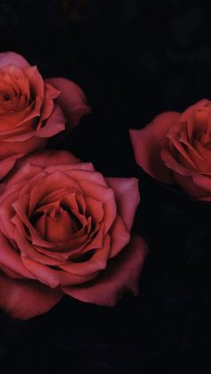 29 Romantic Roses iPhone X Wallpapers Floral Roses iPhone Wallpaper by Preppy Wallpapers. Flowers Wallpaper, Plant Wallpaper, Flower Images, Flower Pictures, Exotic Flowers, Beautiful Flowers, Chiaroscuro Photography, Rose Tumblr, Iphone Wallpaper 4k