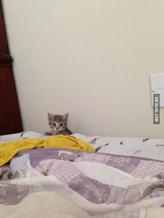 My new kitten spent most of her first day home hiding behind the dresser or bed but would occasionally peek out.
